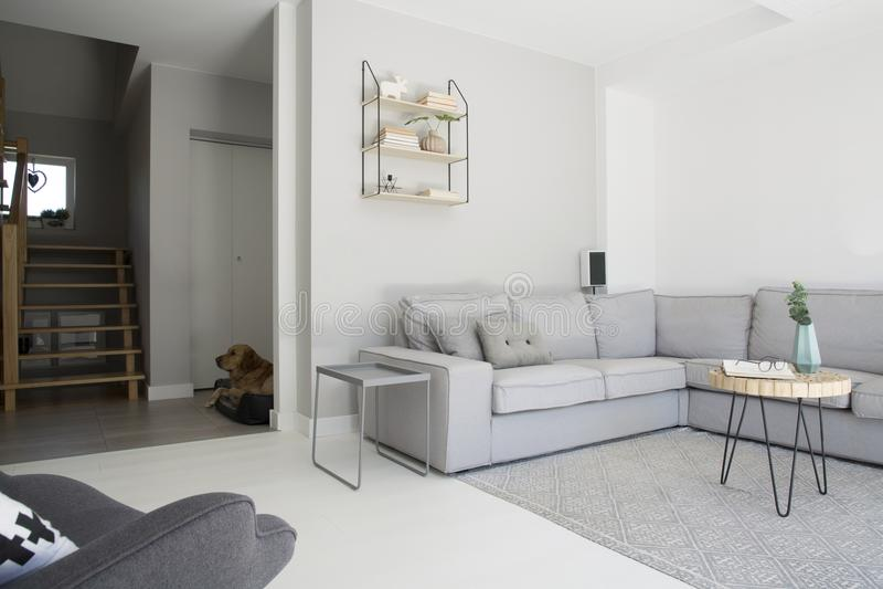 Sofá de canto cinzento com a tabela de madeira no tapete em l monocromático fotografia de stock