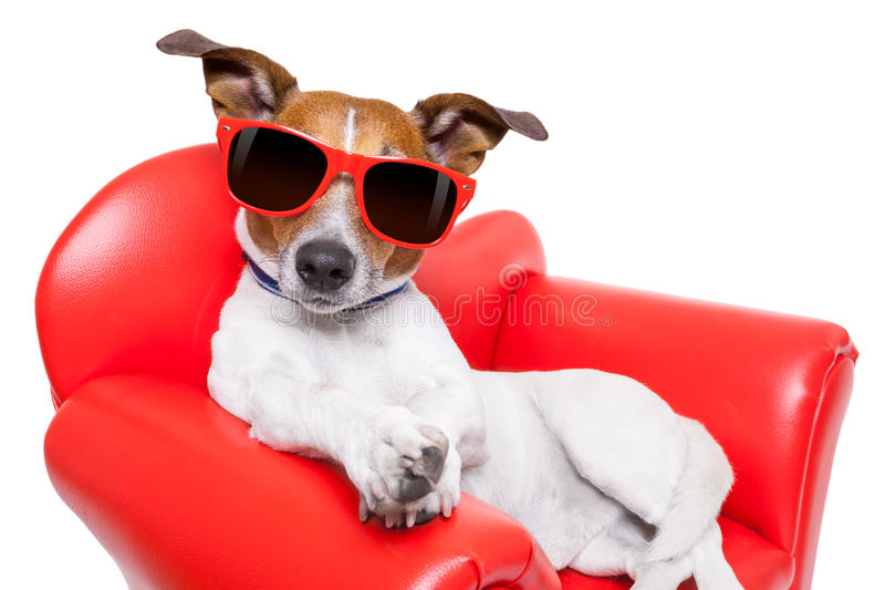 Sofá ou sofá do cão imagens de stock royalty free