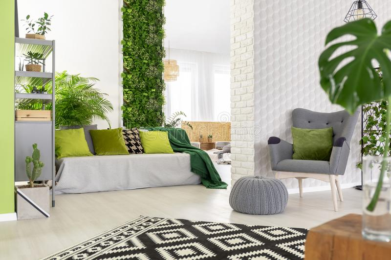 Sofa with green pillows and blanket standing in open space living room interior with grey armchair and footrest, black and white. Carpet and fresh plants stock photo