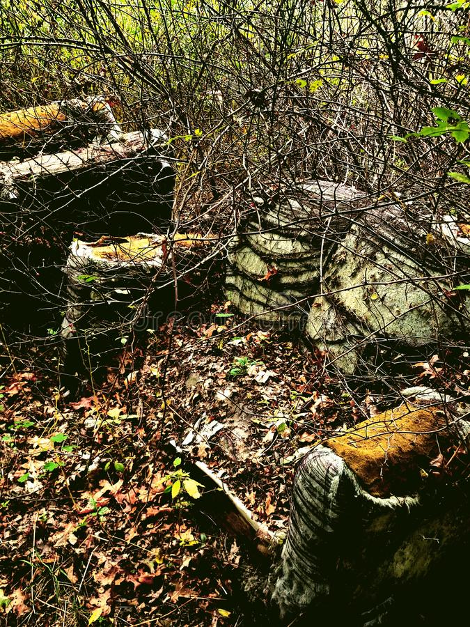 Sofa i skogen royaltyfri bild