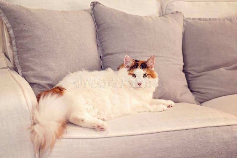 Sofa norvégien de Forest Cat Lounges On A à la maison photographie stock libre de droits
