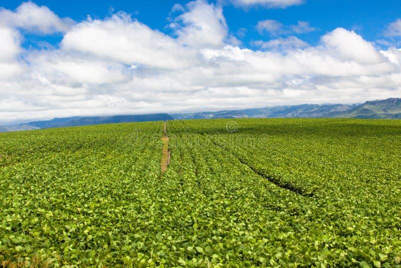 Soffi blu della nube dei raccolti di estate di agricoltura dell'azienda agricola fotografie stock