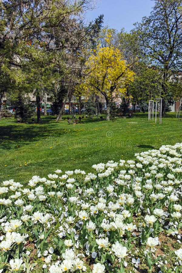 Flower garden and National Palace of Culture in Sofia, Bulgaria royalty free stock image