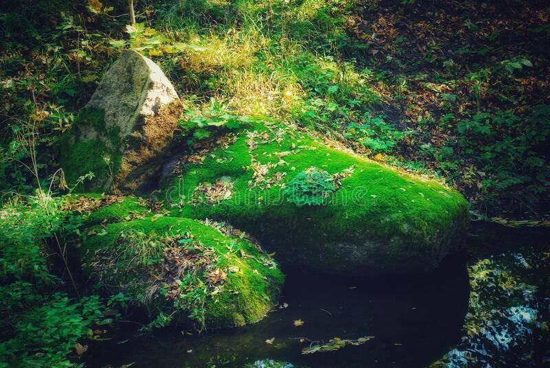Sofiyivka public park, lake, stones overgrown with green moss, close-up.  beautiful screensaver for your phone. stock photo