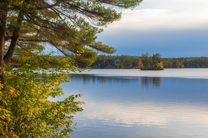 Early evening at a pond royalty free stock images