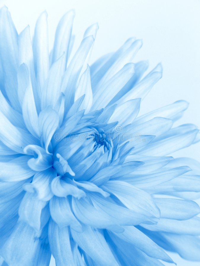 Free Soft Blue Flower Royalty Free Stock Photography - 1723107