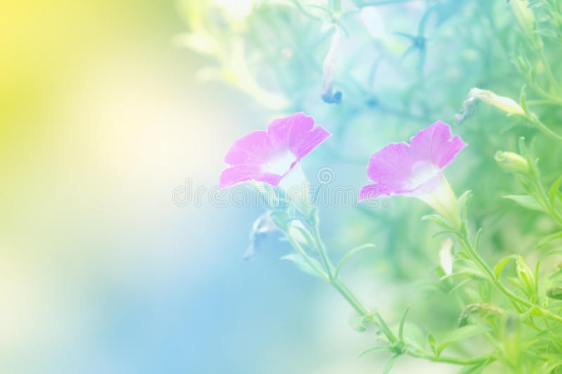 Download Soft Blur Abstract Background With Of Cosmos Flowers. Stock Photo - Image: 83722118