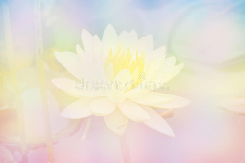 Soft blur lotus flower in pastel colors sweet background stock photo download soft blur lotus flower in pastel colors sweet background stock photo image of colors voltagebd Choice Image