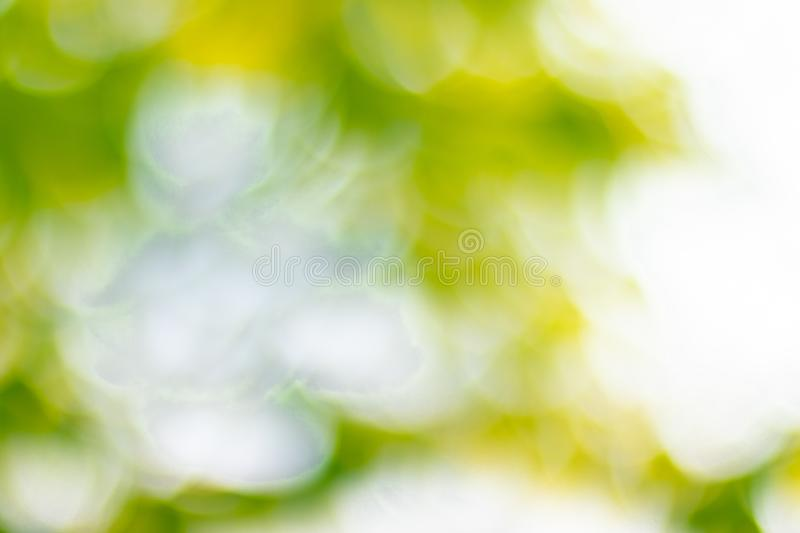 Soft blurred sweet green bokeh nature abstract background stock photography