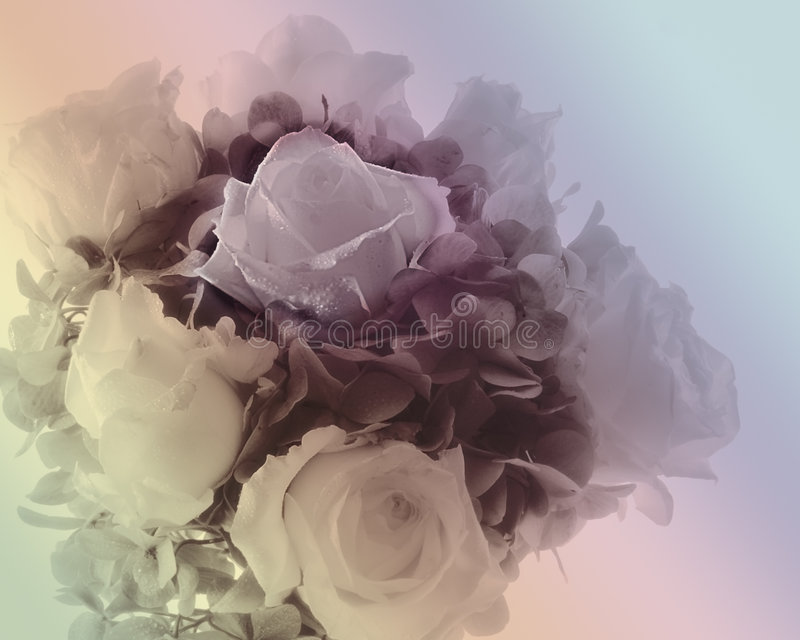 Soft Bouquet Of Roses. Bouquet of roses with water droplets, rendered in soft pastels royalty free stock images