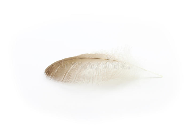 Soft brown duck feather. Isolated on white stock photo