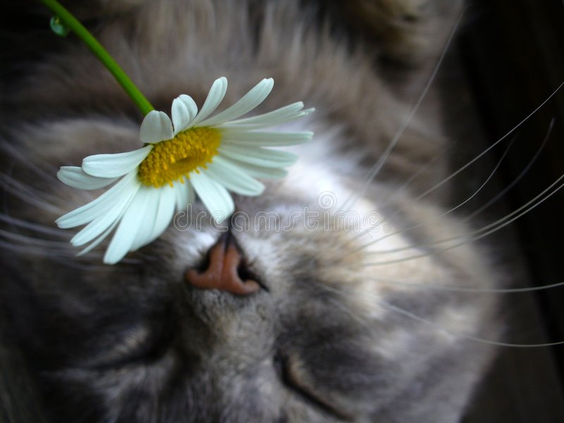 Download Soft-cat stock image. Image of relaxing, brake, oxeye - 2726969