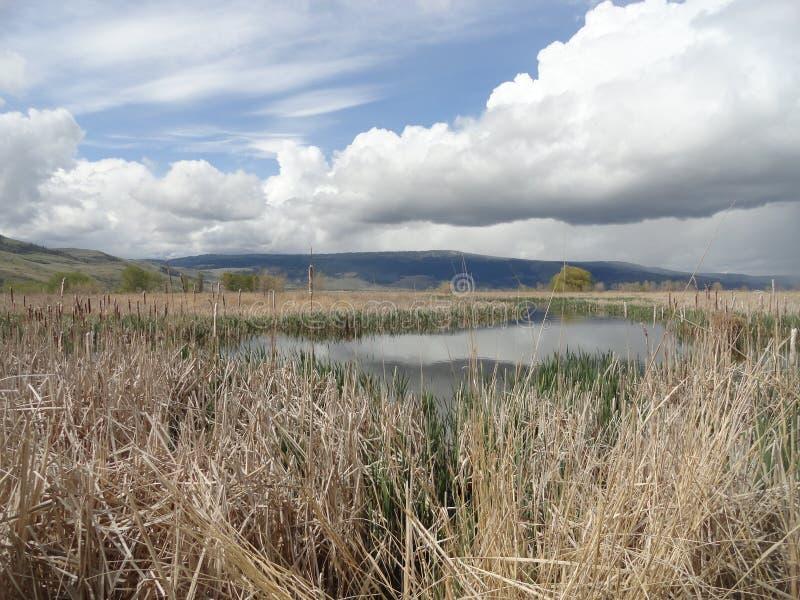 An open Meadow Marshland near McCall, Idaho stock image