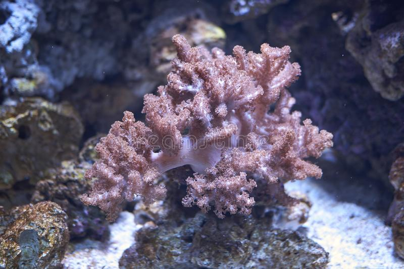 The soft coral. Copenhagen, Denmark - October 11, 2018 : View of the soft coral stock image