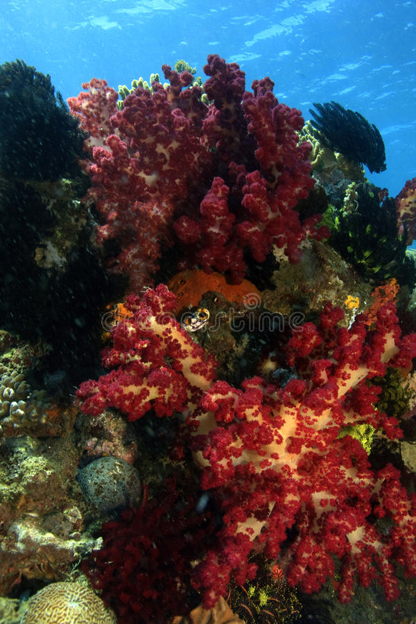 Download Soft Corals Stock Photos - Image: 11142293