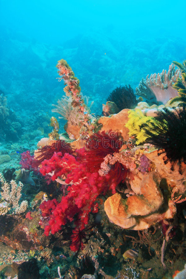 Soft corals stock image