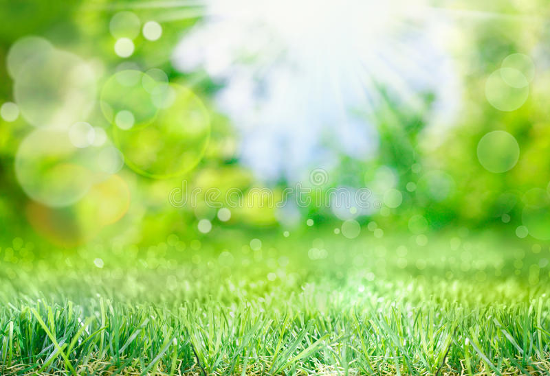 Soft spring background with bokeh. Soft defocused spring background with a sunburst and bokeh over lush green grass