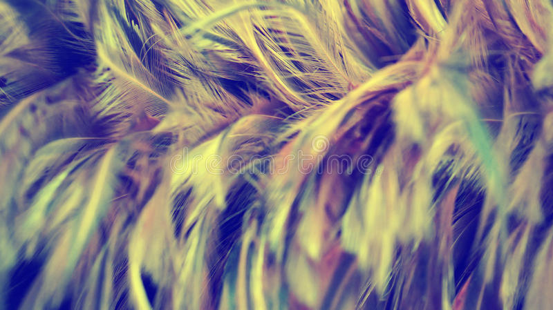 Soft focus brown feathers background royalty free stock photo
