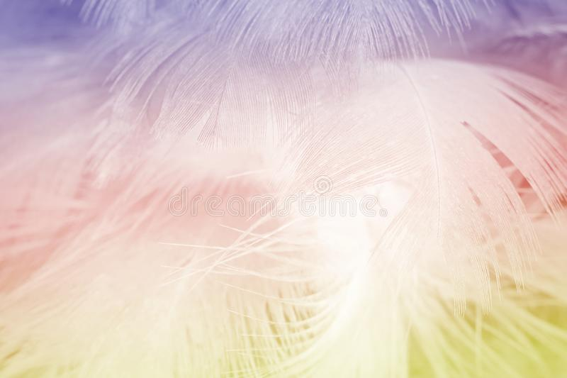Soft focus fashion Color Trends Spring Summer fluffy feathers abstract texture background stock image
