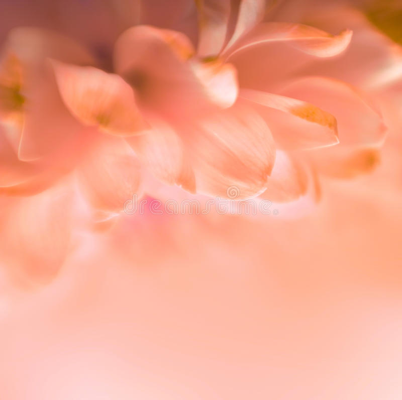 Soft focus flower background. With copy space royalty free stock photo