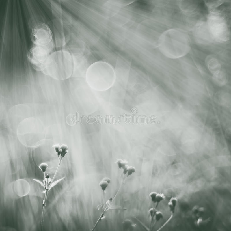 Soft focus of flowers under the sunshine. royalty free stock image