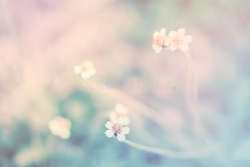Soft focus Grass Flower with pastel color filter effect absta royalty free stock images