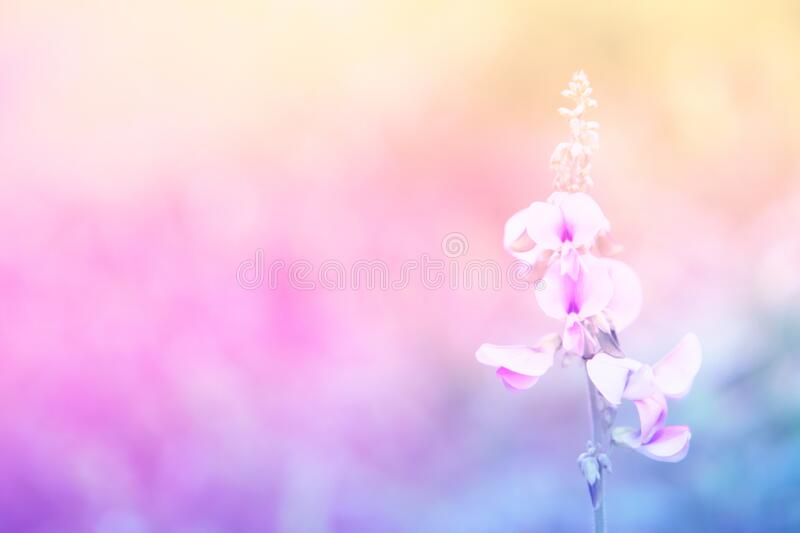 419 470 Spring Wallpaper Background Photos Free Royalty Free Stock Photos From Dreamstime