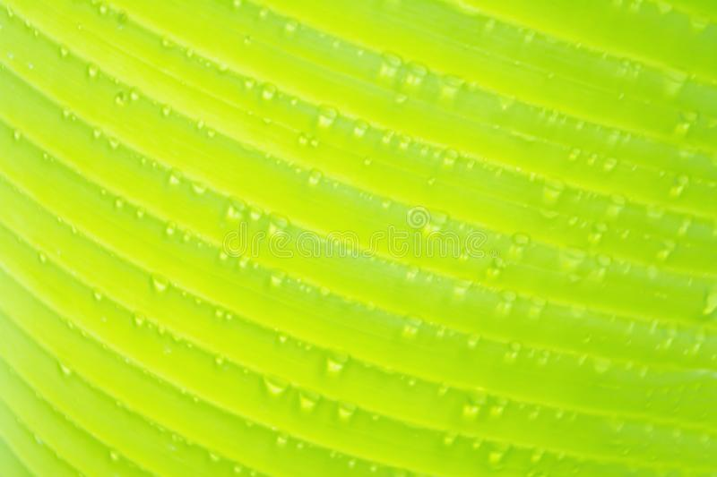Soft focus of green banan leaf with dew drop. Nature background royalty free stock photo