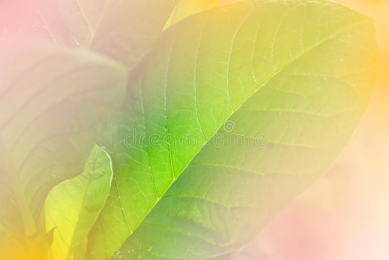 Soft focus of green leaves in the garden. stock photography