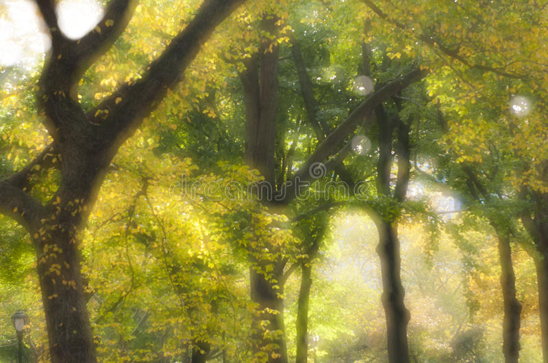 Soft focus image of trees and folliage. Useful for backgrounds stock photos