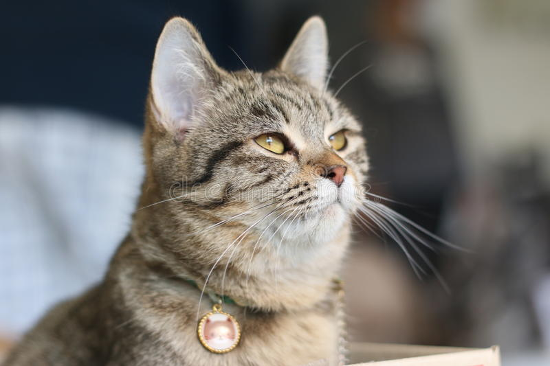 Soft focus lovely cat royalty free stock photos