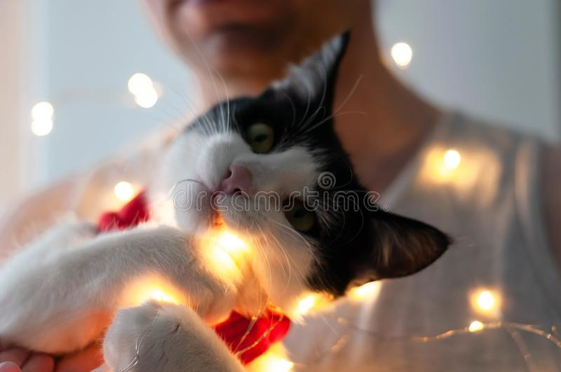 Man holding cute black and white cat in red santa scarf playing with cristmas lights royalty free stock image