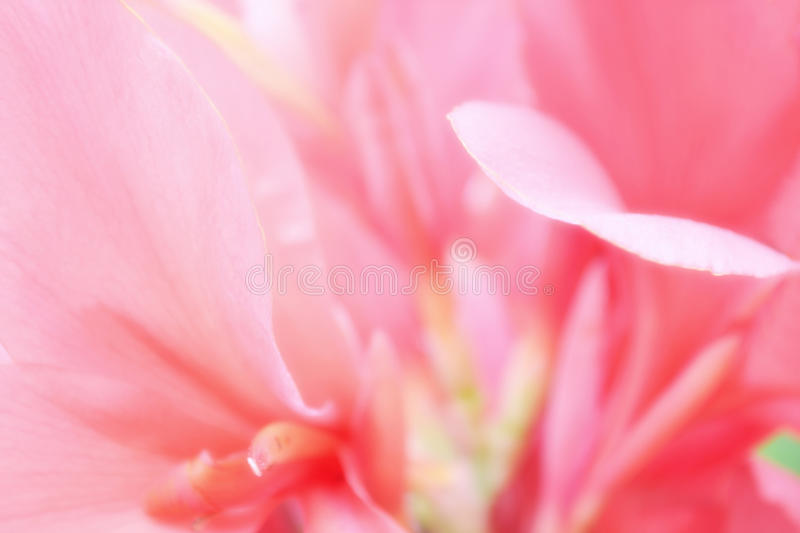 Soft focus pink flower background stock image