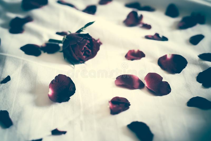 Soft focus of a Rose bouquet on a bed, heartbroken Valentines concept. Leave copy space empty to write text. filter tone dark Sad. Melancholy royalty free stock image