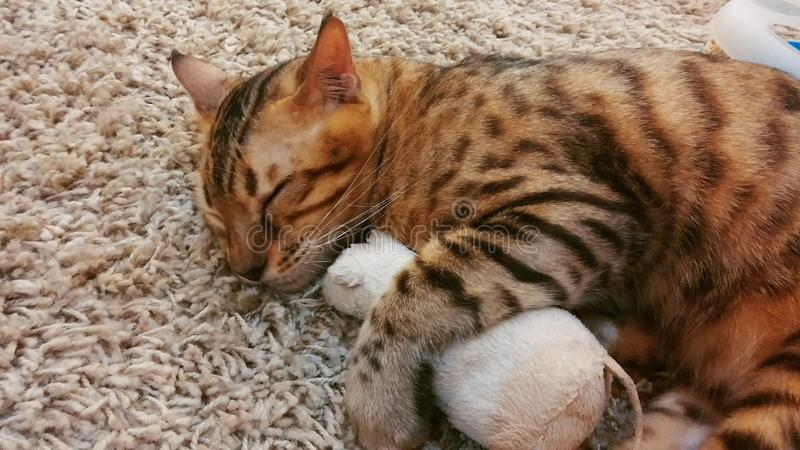 Soft Focus Sleeping Cat Hugging Toy Mouse. On Fluffy Mat used as Template Background Texture royalty free stock photography
