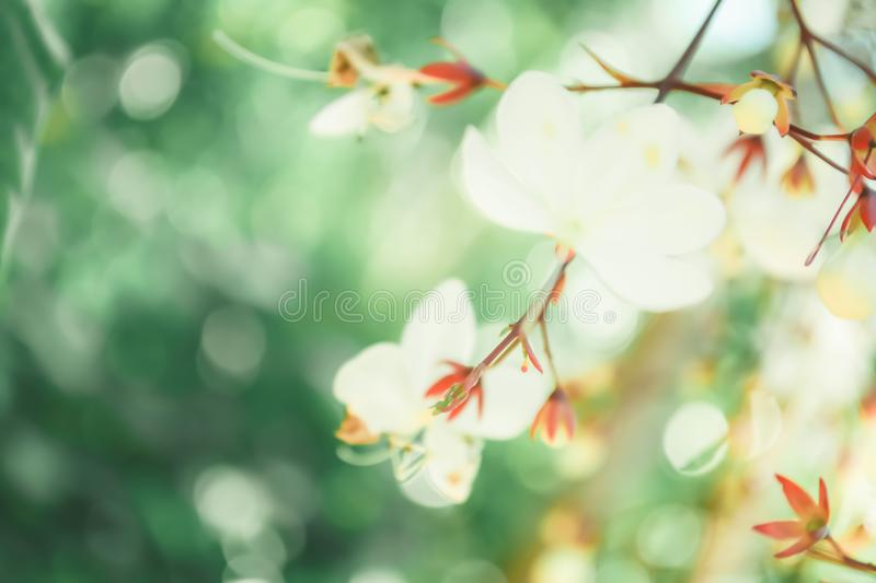 Soft focus small white flower with bokeh spring of nature background. Soft focus small white flower with bokeh spring of nature relax photo wallpaper background stock photography