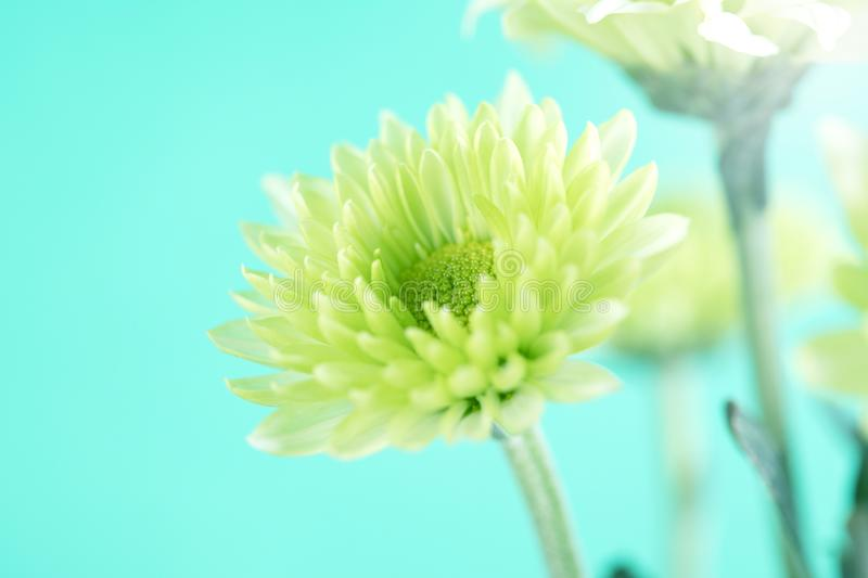 The Soft fresh green flower for love romantic dreamy background , fresh and relax concept royalty free stock photo