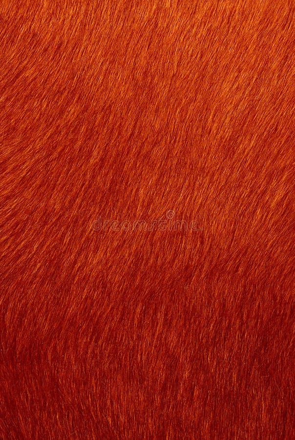 Download Soft fur stock illustration. Image of trend, fashionable - 1966092