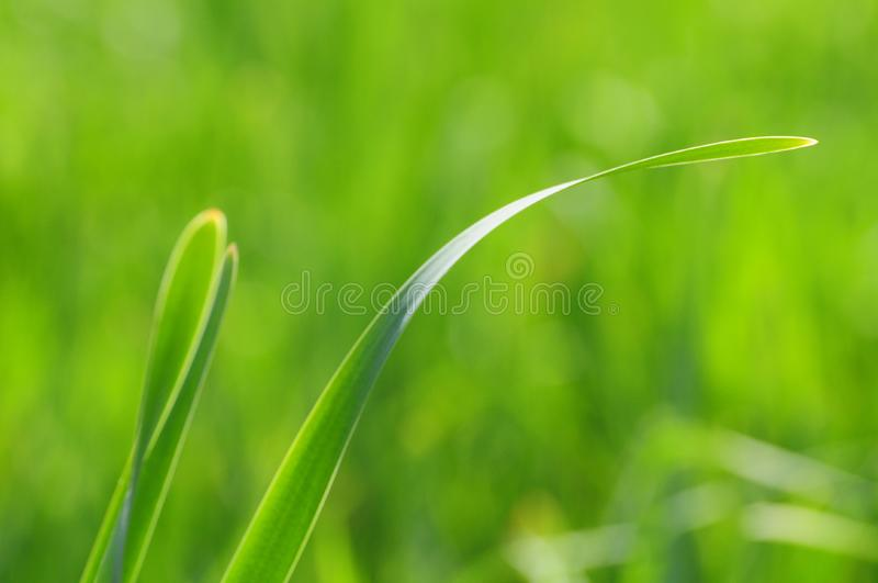 Soft Green Grass royalty free stock photos