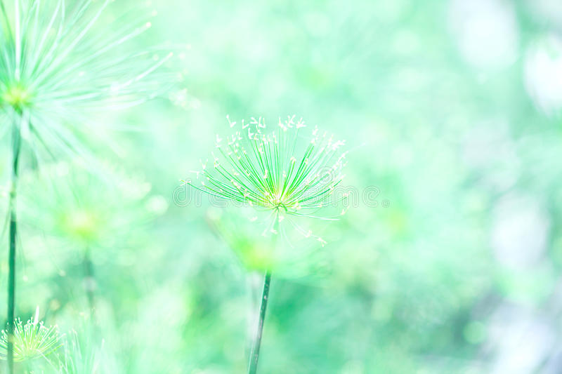 Soft green nature abstract background royalty free stock photos