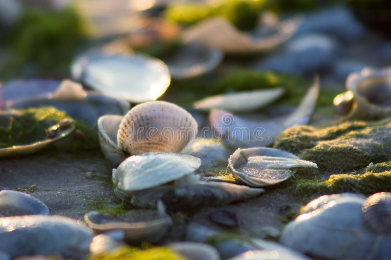 Soft light on the sea coast penetrates shells royalty free stock photos