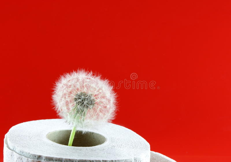 Soft and light toilet paper. Roll toilet paper and the dandelion for emphasize the softness. red background stock photo