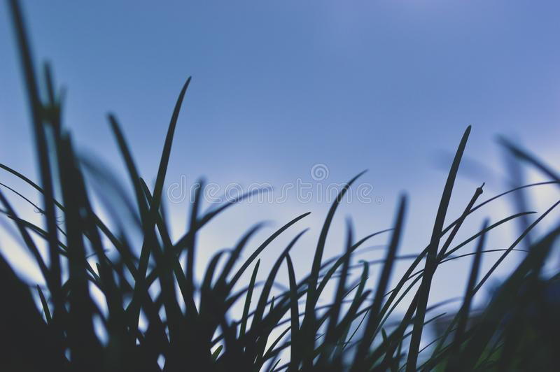 Soft of Looming Grass up stock images
