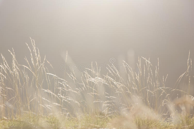 Download Soft Morning Light Nature Background Stock Photo - Image: 16613866