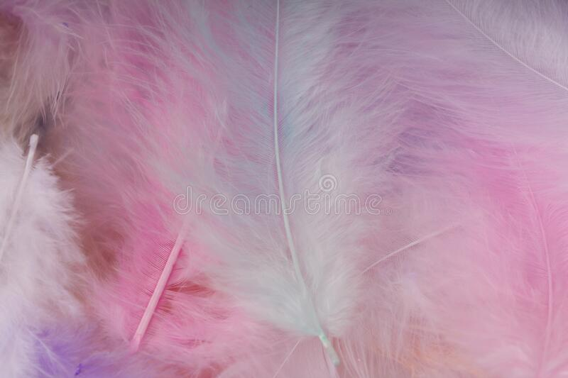 Soft pink feathers background. close up , selective focus.  stock images