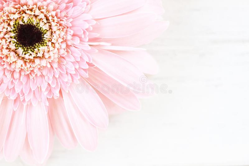 Soft pink flower gerbera daisy on white  table background stock image