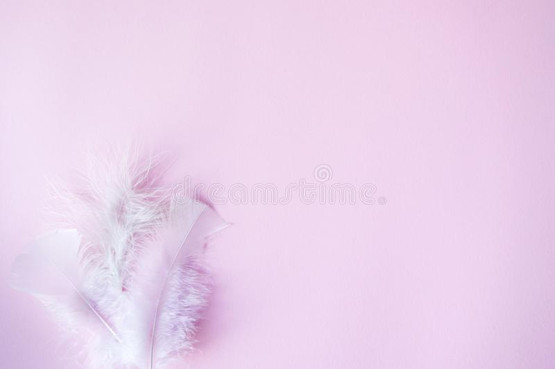 Soft pink pastels background, wedding, valentines theme with white feathers for copy space. minimal concept idea. Soft pink pastels background, wedding stock photography