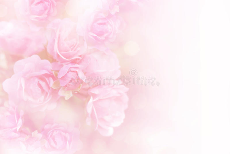 Soft Pink Roses Flower Frame Vintage Background Stock