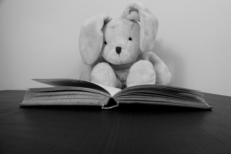Black and white photo of a rabbit plush toy sitting behind an open book. royalty free stock image