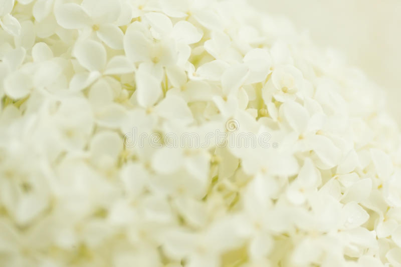 Soft and pure stock photography